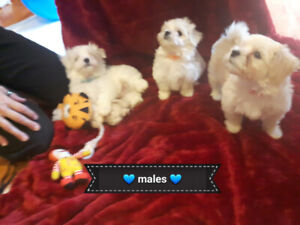 Adopt Dogs & Puppies Locally in Barrie | Pets | Kijiji Classifieds
