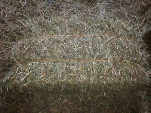 1st CUT HAY FOR SALE