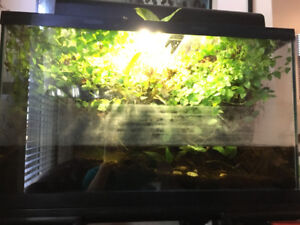 50 gallon setup for fish, reptile or dart frogs