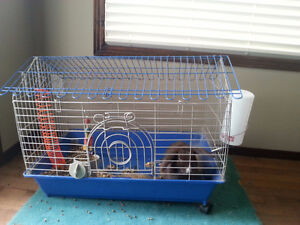 Bunny Rabbit with Cage and all accessories with food..