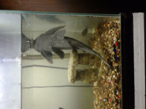 55 gallon tank and fish for sale