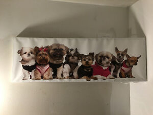 Adorable puppy picture on canvas.