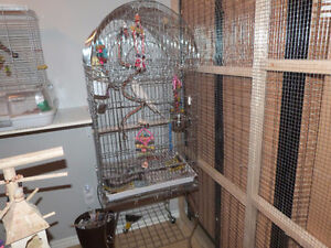 cage 20x20