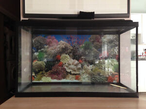 Aquarium / Fish Tank (20 Gallon) For Sale - FREE FILTER