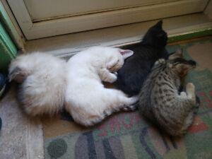 Lovable, Playful Kittens