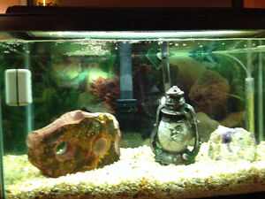 Aquarium 30 gallon with stand and accessories