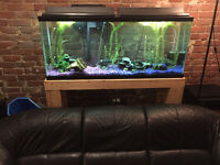 Aquarium 55 gallon 300$ or best offer!