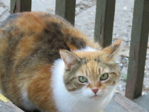 MISSING CAT      Third Line and Rebecca Street in Oakville
