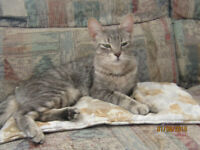 2 Adult cats (siblings) need a new home - spayed & neutered