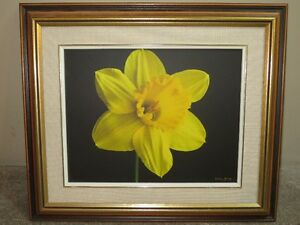 March Daffodil by local Norm Jary with statement of authenticity