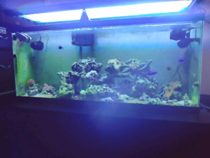 55 gallon saltwater aquarium for sale 1500 obo or trade