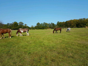 Horse boarding in colborne big Apple $175