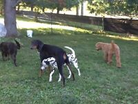 In Home Kennel free dog boarding.