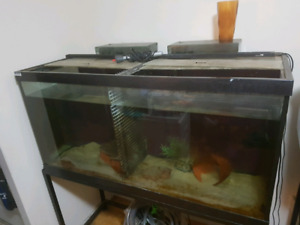 90 gallon tank with accessories