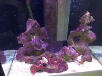 Ocean aquarium rock for sale