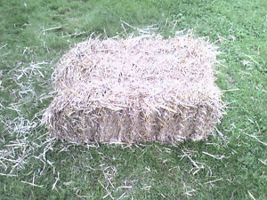 Small Square Bales of Long Straw for Sale
