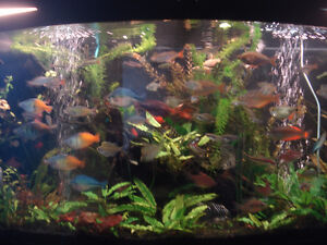 EXOTIC TROPICAL FISH FOR SALE