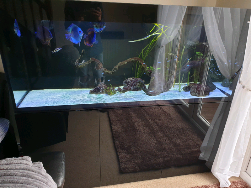 Aquarium/ fish tank | in Newport | Gumtree