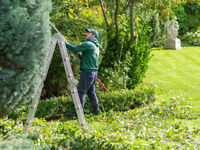 Garden Care | Tree Surgery | Jet Wash in Enfield / 7 Days Availability!