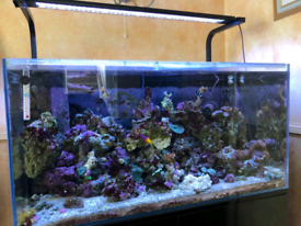 Aquaone Mini Reef Tank 180ltr & contents. *SOLD AS LOT*