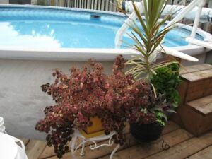 Indoor /Outdoor Plants