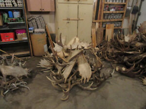 Buying Antler Sheds