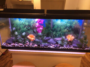 Beautiful 50 Gallon Aquarium With Great Decor And Base For Sale