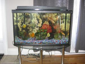 Aquarium 29 gallon