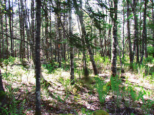 Land for sale in Petite Riviere/Green Bay, NS