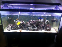 75 Gallon Saltwater Tank with 100 lbs of liverock!!