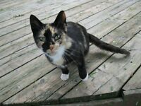Female Calico, Found Stray