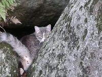 Lost our one year old male neutered cat - Oscar