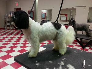 Gentle Dog Groomer Kitchener / Waterloo Kitchener Area image 3