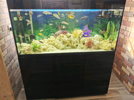 4ft black gloss tank includes fish