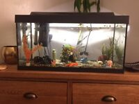 2ft fish tank no stand tropical fish included