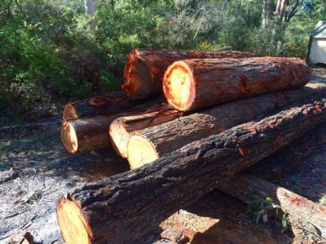 Wanted ironbark trees to cut down for milling around for Gardening tools gumtree