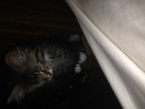 Looking for a home for my kitten
