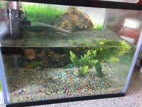 Fish tank filter and 2 little fish and fish food