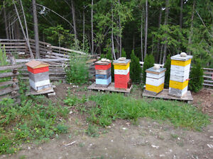Complete Beehive with Colony
