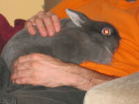 1 male neutered and 1 female rabbit for sale