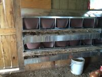 Front roll out nesting box