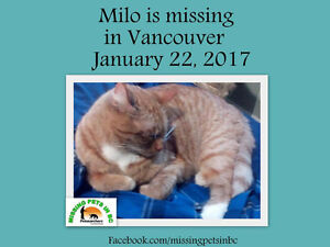 MISSING MALE ORANGE TABBY VANCOUVER BC EAST 50-60TH AREA
