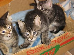 4 kittens to give away.