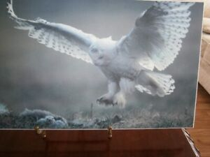 """ARCTIC OWL 21""""x11"""" PICTURE ON PERMAPLAQUE MOUNTING"""