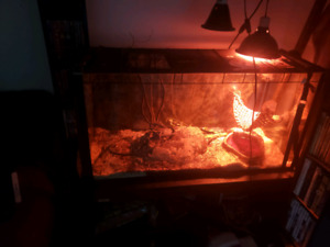 6 ft red tail boa must sell no reasonable offer refused
