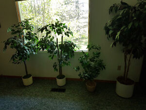 Selling 4 Artificial trees. Located in battleford