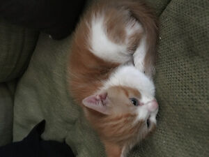 Kittens available for adoption male and female