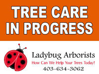 Consulting Arborist can save you grief and money