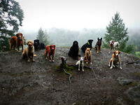 Nanaimo Adventure Camp for dogs.