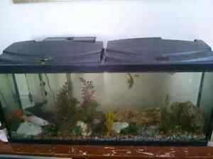 5o gallon fish tank and fish and accessories $175.00
